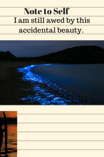 sea shore night bioluminesence